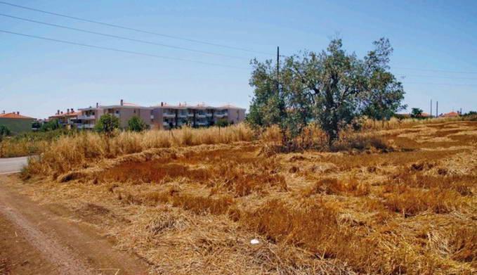Land For Sale Halkidiki Greece 2