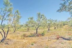 Land For Sale Halkidiki Greece 3