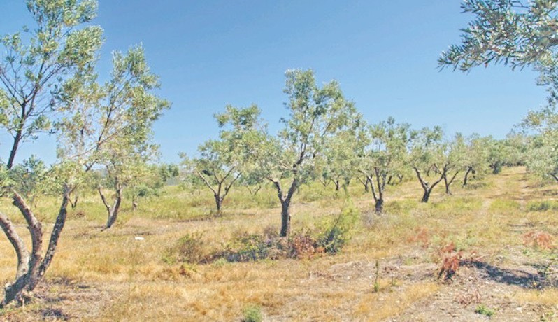 Land For Sale Halkidiki Greece 3