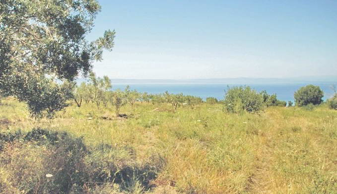 Land For Sale Halkidiki Greece 4