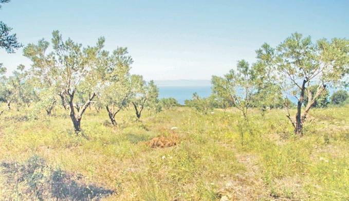 Land For Sale Halkidiki Greece 5
