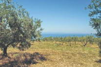 Land For Sale Halkidiki Greece 6