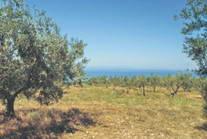 Land For Sale Halkidiki Greece 6