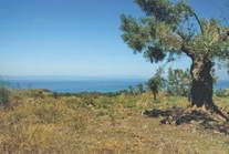 Land For Sale Halkidiki Greece 7