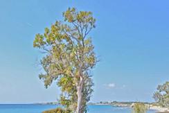 Seafront Villa LAgonisi 30