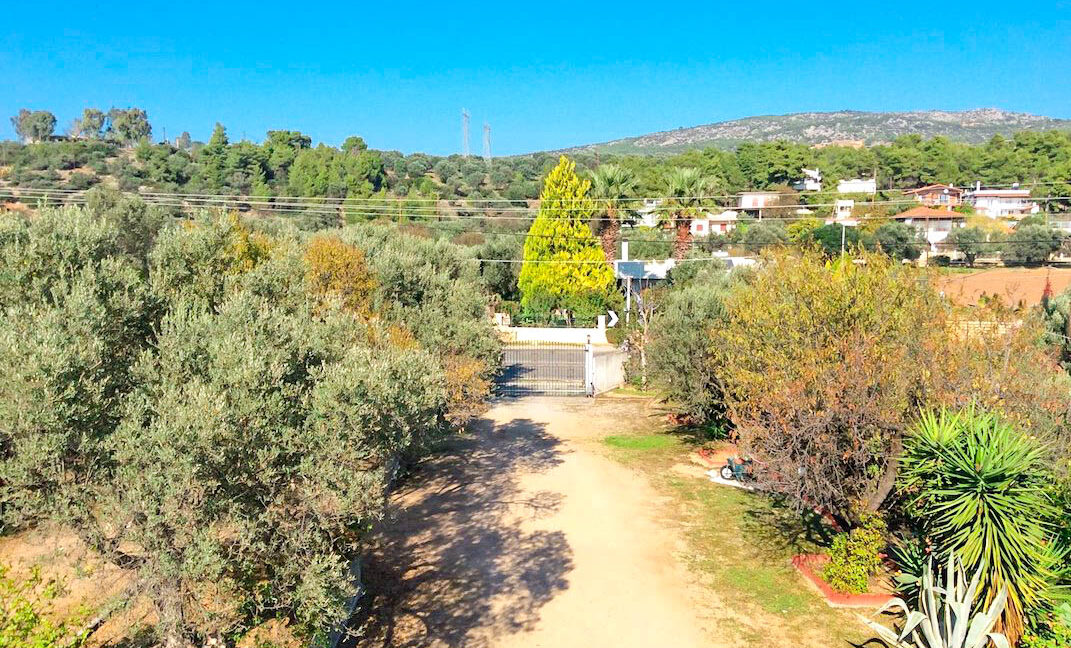 Seafront House in Evia Greece. Seafront Property in Euboea Greece 22
