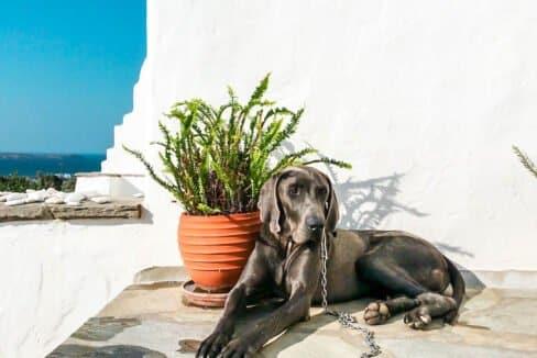 House for Sale in Paros Greece, Property Paros Island Greece, Real Estate in Paros 6