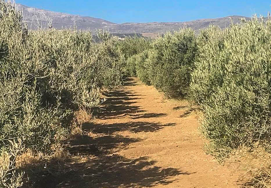 Seafront Land in Paros Greece to built, Land for Sale Cyclades Greece6