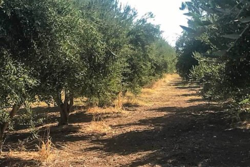 Seafront Land in Paros Greece to built, Land for Sale Cyclades Greece8