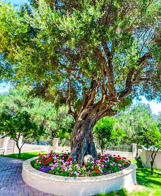 Sea View Villa Corfu Island, Corfu Homes for Sale 3