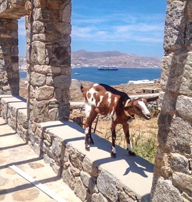 Sea View Villa Ornos Mykonos for sale, Mykonos Property. Buy House ornos Mykonos Greece. Properties in Mykonos Greece 16